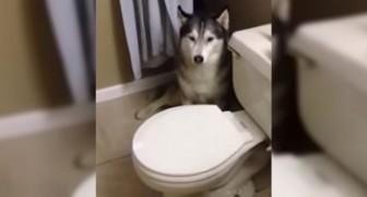 Hennes hund gråter och gömmer sig... När ni förstår varför kommer ni inte kunna sluta att le