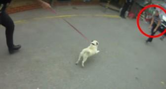 Regardez le moment magique où un chien VOLÉ retrouve sa maman