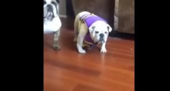 Hon sätter en flytväst på sin hund, men reaktionen är inte den hon förväntar sig