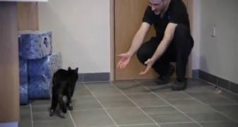 A première vue on dirait un chat normal mais il est un miracle de la technologie médicale