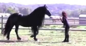 De trainster roept hem: dit MAGNIFIEKE paard zal je versteld doen staan