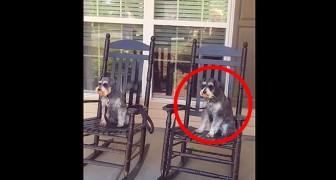 Ze filmt haar honden op de veranda... houd je ogen goed gericht op de hond aan de rechterkant...