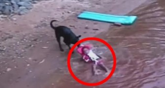 A child plays in the water, what this dog does could save his life one day !