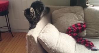 Seine Katzen zerstören alle Möbel, aber seine Lösung ist brillant!
