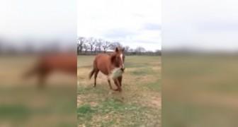 Um cavalo corre com a boca cheia de pasto: o que está para fazer é muito fofo!