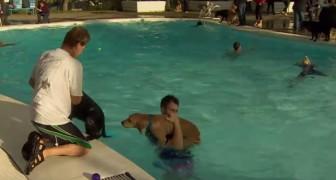 Une fois par an, cette piscine organise une fête UNIQUE en son genre!