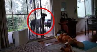 Er sagt seinem Hund, dass Zeit zum Baden ist. Seine Reaktion ist wirklich nicht das, was man sich erwartet!