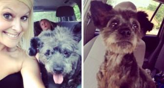 Una donna adotta un cane malato per rendere speciali i suoi ultimi giorni di vita