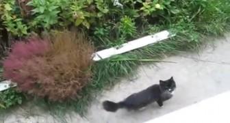 Diese Frau hat eine geniale Art, die Katze ins Haus zu holen...Ein echter Kraftakt!