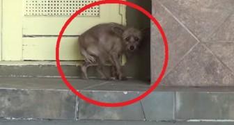 Deze hond is in de steek gelaten en DOODSBANG: kijk wat er gebeurt na een paar minuten