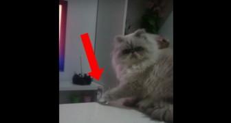 Sale sul tavolo della cucina e vi mostra ciò che i gatti sanno fare meglio... Esilarante!