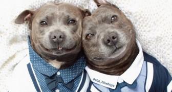 Darren e Phillip, due pitbull adorabili diventano star dei social network