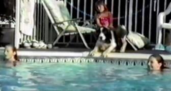 Sie bereiten sich auf den Wettkampf vor: Haltet die Augen offen, was der Hund macht.. Witzig!