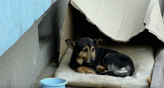 He lived in a box ignored by everyone, but look what happens when someone approaches him...