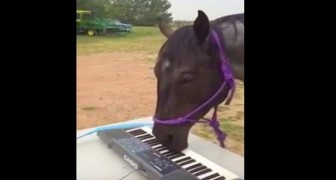 She gives her horse a keyboard ... but what happens shortly after is imressive !