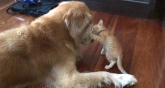 They bring a stray cat in the house, and here's what happens when he meets the house dog...