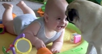 The dog plays with the baby, but has in mind an evil plan!
