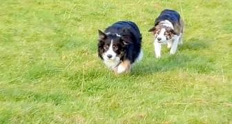 De ser deras hundar röra på sig på ett konstigt sätt... Titta på vad som händer till slut!