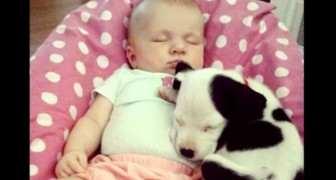 A child and a dog grow up together: their first year of life is pure emotion !