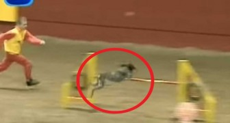 The video of one of the fastest dogs in the world will give you chills !