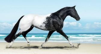Voici les chevaux les plus élégants et majestueux du monde... On est sous le charme!