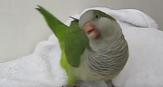 Sie bringt einen Papagei nach Hause, aber wenig später erfährt sie, was er macht