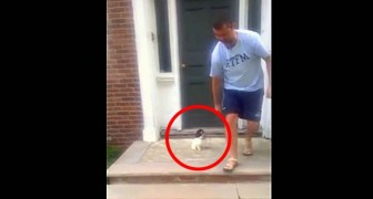 This puppy is afraid of stairs: here's how he solves the problem... hilarious!