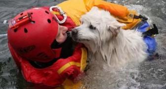 Un chien remercie le pompier qui l'a sauvé: voici qui sont les vrais héros