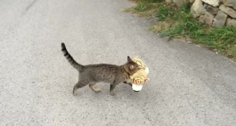 A cat goes to the neighbor and steals a toy. What he watns to do? Watch this !