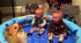 When this cute dog starts jumping, even the mother was surprised by the twins' reaction