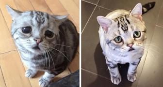 Vi presento Luhu, il gattino più triste del web