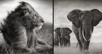 Afrikaanse dieren zoals je ze nog nooit hebt gezien: dit is hun meest intieme en majestueuze zijde