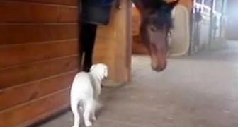 In het begin is deze hond nog een beetje bang, maar al snel gebeurt er iets magisch