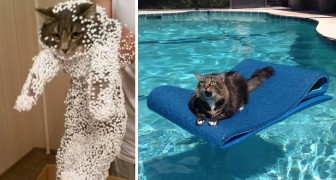 10 Katzen, die ihre Entscheidung bitter bereut haben
