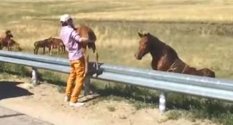 Encontram um animal que chora na rua... o que fazem é comovente