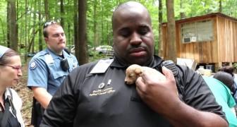De räddar 526 hundar från djurplågare... här ser ni dem 1 år senare..
