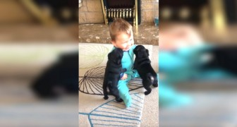 These 2 puppies have never seen a child: now look at his face!