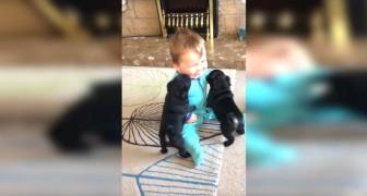Estos 2 cachorros no vieron jamas un bebe: mira atentamente sus caritas!