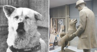 Attende il suo padrone alla stazione per 10 anni: ecco la storia del cane più fedele al mondo