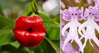 Ca ne ressemble pas à une fleur... et pourtant: 10 espèces florales qui ressemblent à tout autre chose