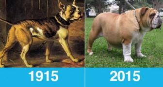 Les chiens d'une même race photographiés aujourd'hui et il y a 100 ans: ça en valait vraiment la peine?