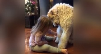 The child sits in front of the dog: what they do surprises even the parents !