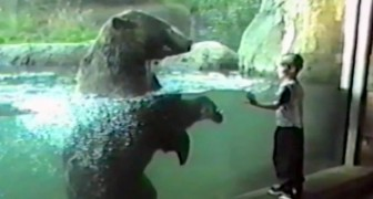 A child approaches the bear, but neither he nor his parents expect this reaction !