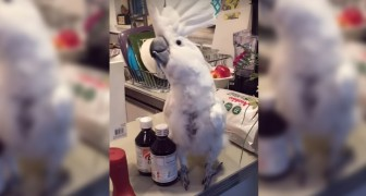 This parrot loves dancing, but in the end he does even more ... !