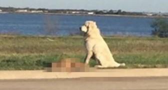 Un chien se retrouve sur tous les journaux télé pour son incroyable preuve de fidélité