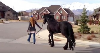She takes her horse for a walk in the street... the neighbors are shocked !