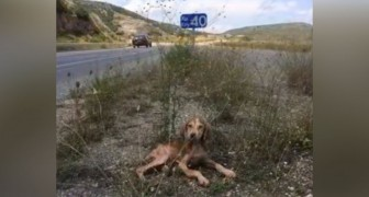 Sick and abandoned in the middle of nowhere: here's the rescue of a lucky puppy