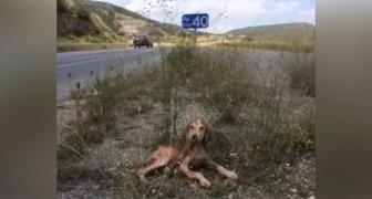Malade et abandonné au milieu de rien : voilà le sauvetage d'un petit chien qui a un ange gardien