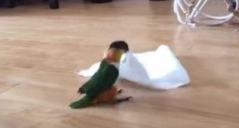 She gives her parrot a paper towel, but didn't expect this!