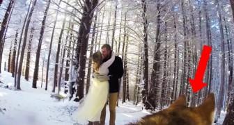 2 sposi fanno girare il video matrimoniale al loro CANE: il risultato è poesia pura